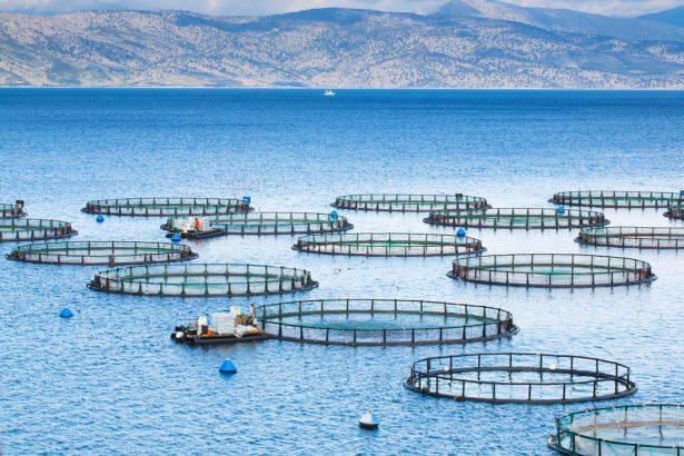 pêche en méditerranée