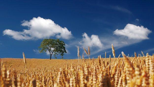 agriculture plus  verte