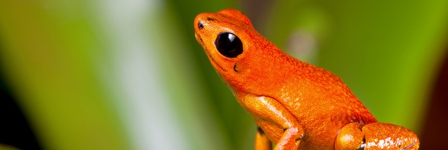 Une expédition pour sauver 25 espèces « disparues »