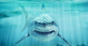 11 animaux qui tuent bien plus que les requins