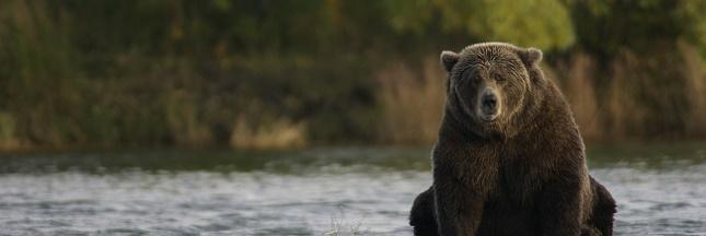 Chasse en Alaska : les citoyens dénoncent une décision cruelle et gratuite