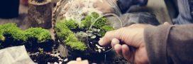 Pour un petit coin de nature à l'intérieur, pensez à créer un terrarium