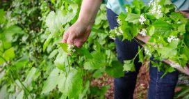 Créer sa propre forêt-jardin: abondance, biodiversité et plaisir