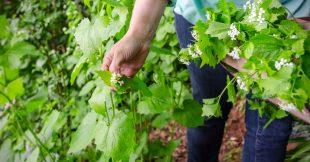 Créer sa propre forêt-jardin : abondance, biodiversité et plaisir
