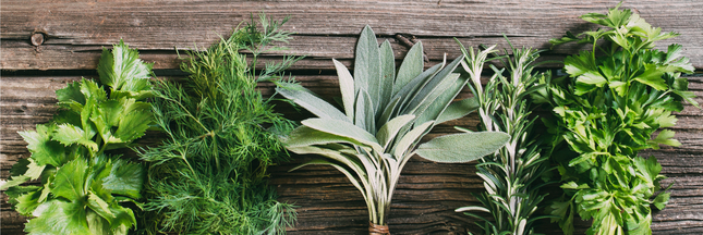 les herbes aromatiques des produits vendus prix d 39 or. Black Bedroom Furniture Sets. Home Design Ideas