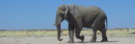 Site naturel classé à l'Unesco: un sur trois menacé par le braconnage