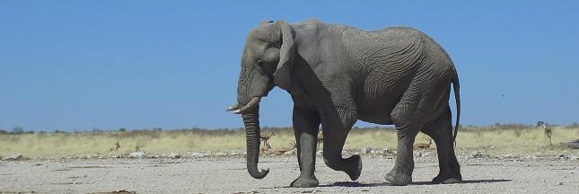 Site naturel classé à l'Unesco : un sur trois menacé par le braconnage