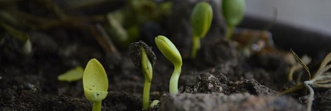 Permaculture : un livre et un film à l'affiche