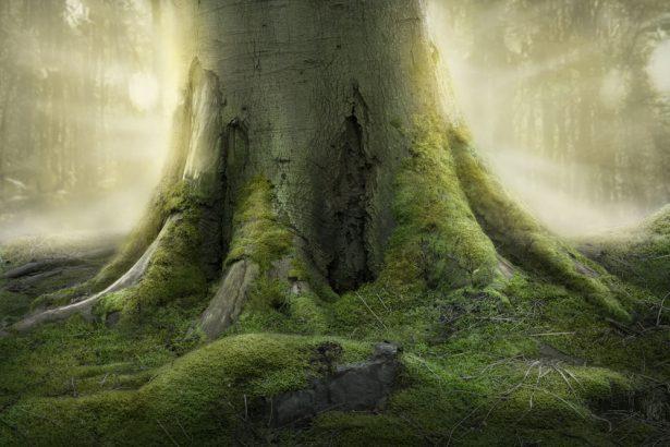 recensement universel des arbres