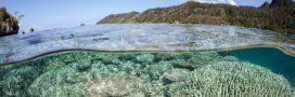 Au Japon, des scientifiques cherchent à sauver les coraux
