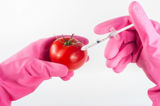 risques, risques liés aux OGM