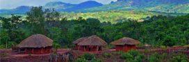 Les forêts du Mozambique pillées par la Chine