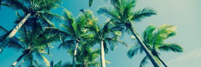 La FAO lance un plan d'attaque contre le charançon rouge du palmier