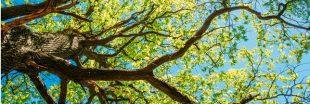 Les résultats du premier recensement universel des arbres