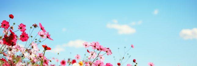 Élixirs floraux: des bouquets pour l'âme