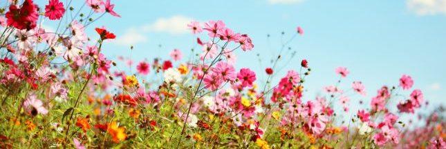 Élixirs floraux : des bouquets pour l'âme