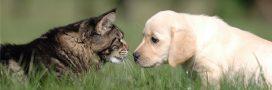 Royaume-Uni: adoptez un animal, profitez d'un congé!