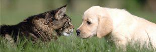 Royaume-Uni : adoptez un animal, profitez d'un congé !