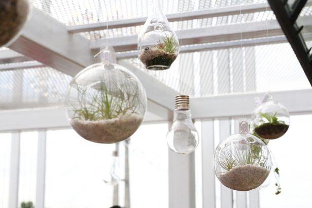 créer un terrarium, décoration intérieure