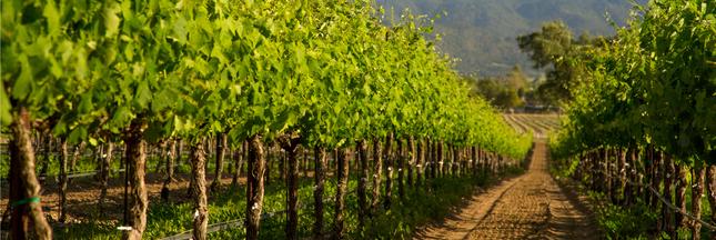 vigne, marc de raisin