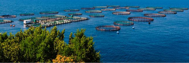 Pour préserver sa faune marine, la France crée des zones de conservation