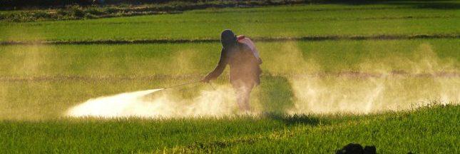 Atrazine : la France exporte son poison vers les pays du Sud