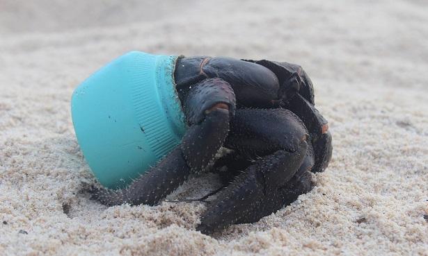 crabe plastique