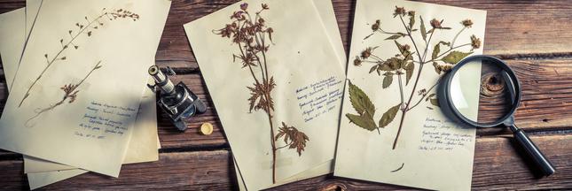 L'Australie détruit des échantillons français de plantes du 19ème siècle