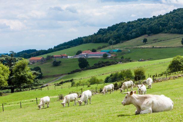 loi potier, troupeau de vaches, ferme française, terres agricoles