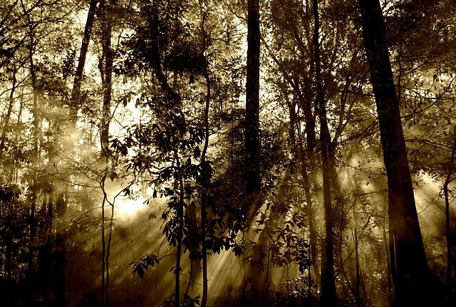 investissement forestier, foret