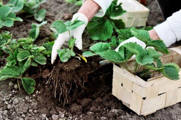 que planter en mai