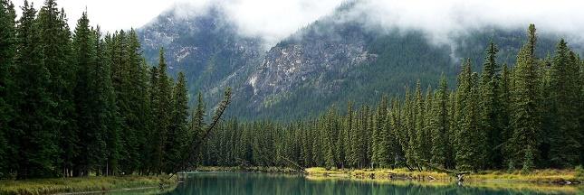 Greenpeace en procès pour vouloir défendre les forêts