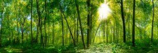 Investissement forestier : l'épargne est dans la forêt