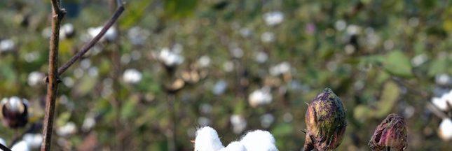 Karim Traoré, producteur de coton équitable: aux consommateurs de bouger