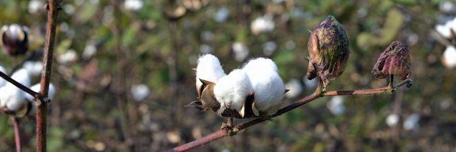 Karim Traoré, producteur de coton équitable : aux consommateurs de bouger