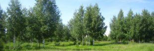 Seulement planter des arbres ne permettra pas de réduire notre empreinte carbone