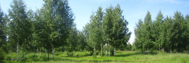 Compensation carbone : planter des arbres n'est pas la bonne solution !