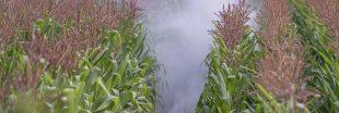 OGM: les cultures ont augmenté en 2016