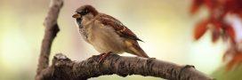 Braconnage: 25 millions d'oiseaux tués chaque année
