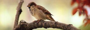 Braconnage : 25 millions d'oiseaux tués chaque année