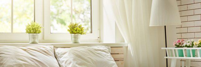 plante chambre, plante dans une chambre