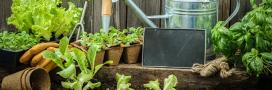 Sondage: Cultivez-vous un potager?