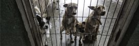 Le scandale de la SPA de Pau: euthanasies massives et maltraitance
