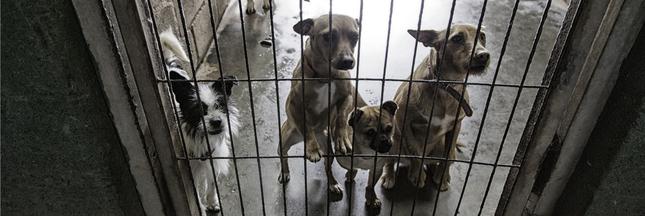 Le scandale de la SPA de Pau : euthanasies massives et maltraitance