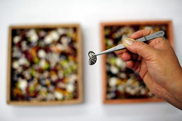 réserve mondiale de semences