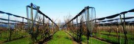 Le gel fait de nombreux dégâts sur les vergers de France