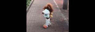 Vidéos drôles de chiens : les cruelles coulisses