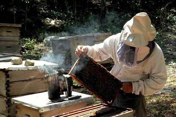 miel mexicain, apiculteur