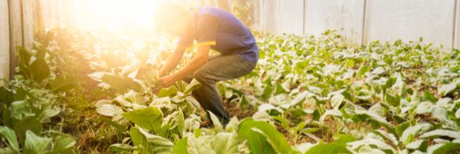 Les agriculteurs bio français se mobilisent contre une bio au rabais