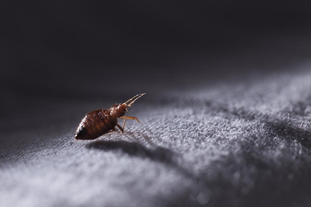 voir des petites bites grosse bite circoncis
